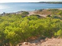 В этой части Крита много сосен