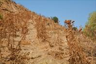 Середина тропы на Platanakia